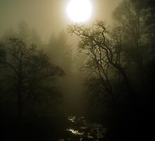 Campsie Glen by Ian Mac