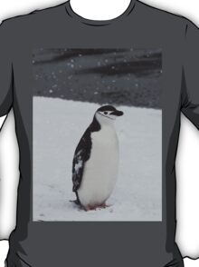 Special Chinstrap Penguin T-Shirt