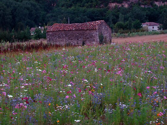 wildflowers and old cottage, Tarn region, South France by wilderpisces