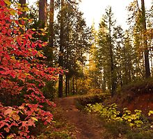 Stanislaus National Forest, Tuolumne County, California, USA by Mike Kunes