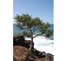 Pandanus Tree, Tweed Heads Photographic Print