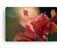 Bougainvillea Bokeh Canvas Print