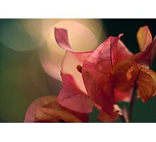 Bougainvillea Bokeh Photographic Print