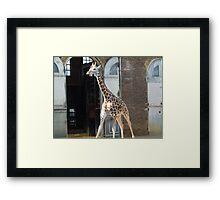 Take a photo of me Framed Print
