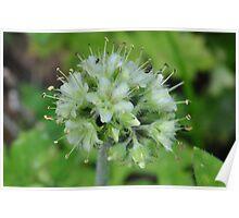 Spherical wildflower Poster
