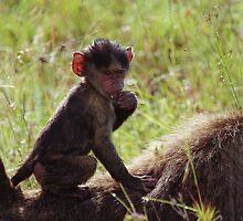 Monkey on My Back by Kyle Jerichow