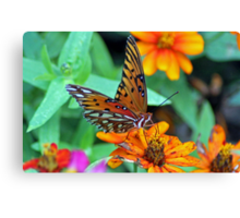 Monarch Butterfly Resting Canvas Print