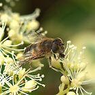 Pollen time by John Thurgood