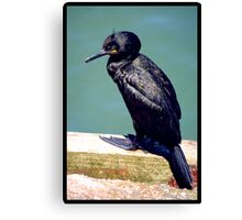 Unknown Bird Canvas Print