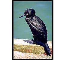 Unknown Bird Photographic Print