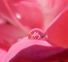 ROSE IN A RAINDROP by Sandra  Aguirre