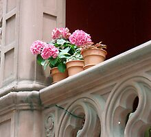 geraniums on a balcony by DarylE