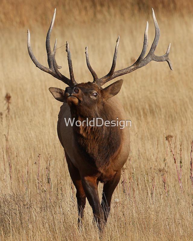 Elk Charging by William C. Gladish