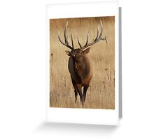 Elk Charging Greeting Card