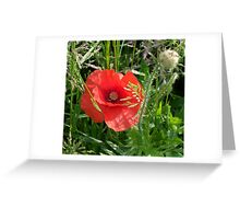 Cornpoppy Greeting Card
