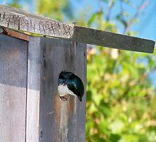 Peek-a-boo by Dandelion Dilluvio