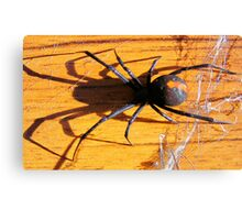 Red Back Canvas Print