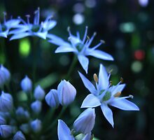 silent night. by katieshau