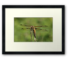 Frontal View Framed Print