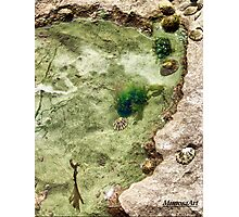 Green Rock Pool Photographic Print