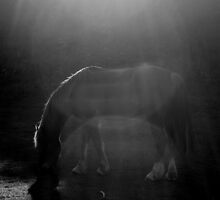 A Horse With Flare by Anthony Thomas