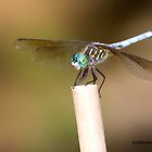 Dragon Fly by Jerry  Mumma