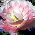 My Favorite Flower Shot by Bob Wall