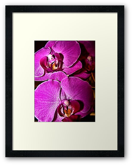 Orchids by Bob Wall