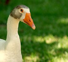 Goose Got You Down? by veteran