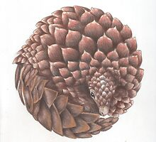 pangolin by CreatureStudies