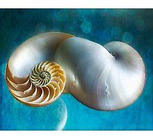 Aquatic Dreams II Photographic Print