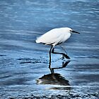 Egret by Bob Wall