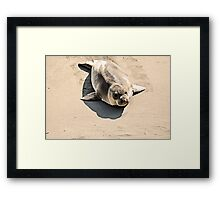 Hauling Out Framed Print