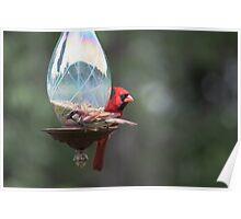 Cardinal and sparrow Poster