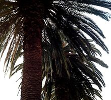 Palm Trees by moonshinepdise