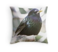 European Starling. Throw Pillow