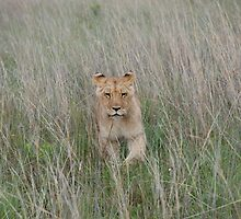 through the long grass by Candice Cahill