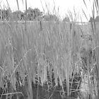 Cat tails by MicheleSS
