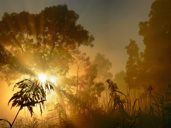 Morning Magic through the Merri Grass by Larry Lingard-Davis