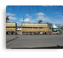 Cattle on the Move Canvas Print