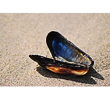 Mussel Shell Photographic Print