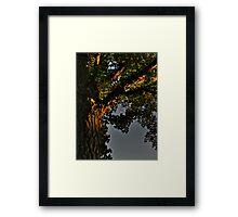 Ginko Tree (detail) Framed Print