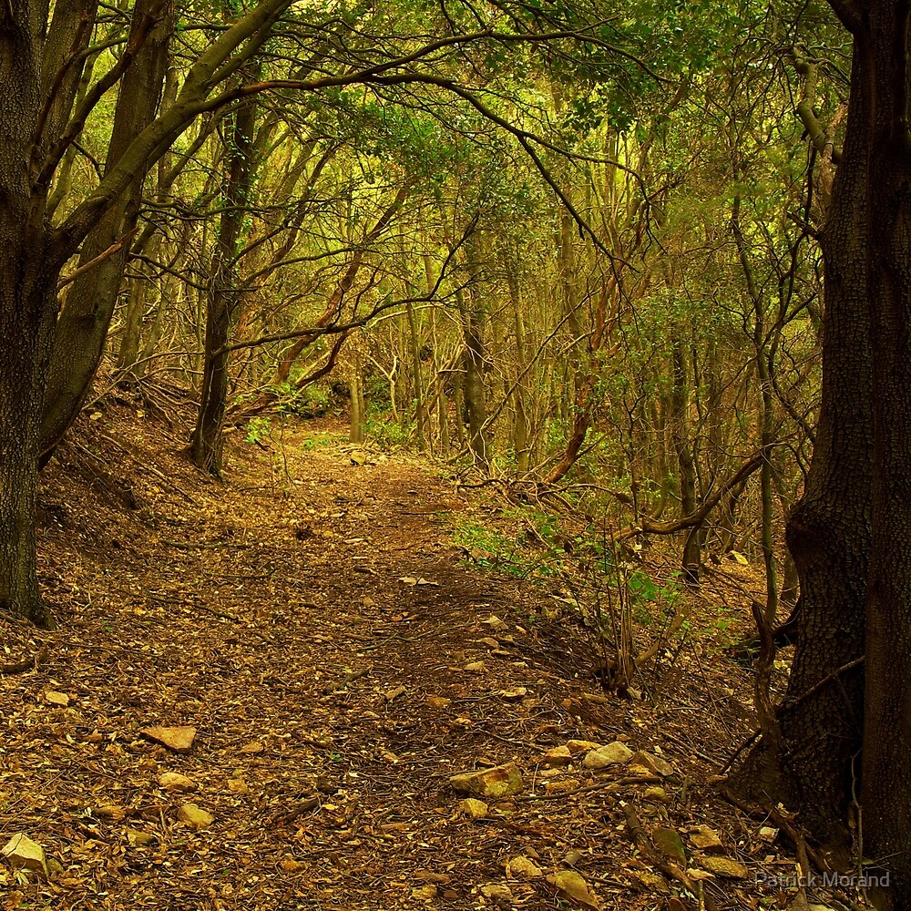 Golden path by Patrick Morand