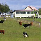Queensland Scene by Virginia McGowan