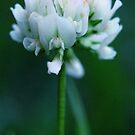 clover by NicoleConrau