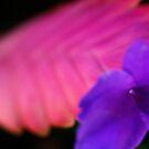 Fluro Purple Flower by NicoleConrau