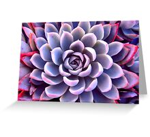 Grey & Pink Succulent Greeting Card