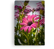 Tough Guys Shoot Pink Canvas Print