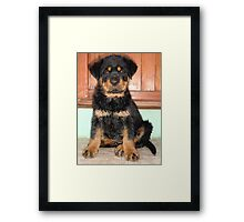 One Damp Dog  Framed Print