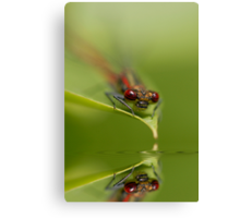 Reflect on Damsel Canvas Print